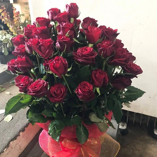 50 red rose delight